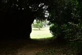 社頂自然公園,船帆石:社頂自然公園 (11).JPG