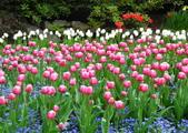 維多利亞布查花園:維多利亞布查花園_1000420_0510 842.jpg