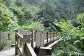竹坑溪步道:竹坑溪步道 (13).JPG