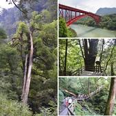 拉拉山國有林自然保護區:相簿封面