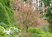 維多利亞布查花園:維多利亞布查花園_1000420_0510 843.jpg