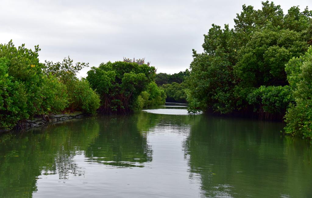 四草紅樹林綠色隧道 (22).JPG - 四草綠色隧道,陸軍特戰指揮部-武漢營區