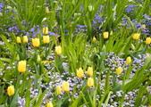 維多利亞布查花園:維多利亞布查花園_1000420_0510 844.jpg