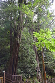 拉拉山國有林自然保護區:_DSC0351.JPG