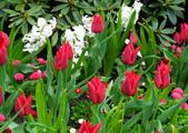 維多利亞布查花園:維多利亞布查花園_1000420_0510 845.jpg