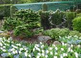 維多利亞布查花園:維多利亞布查花園_1000420_0510 941.jpg