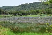 哭泣湖畔自然生態園區:DSC_0293.JPG