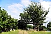 八德埤塘生態公園 :八德埤塘生態公園 (11).JPG