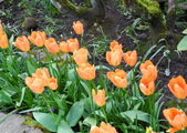 維多利亞布查花園:維多利亞布查花園_1000420_0510 944.jpg