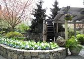 維多利亞布查花園:維多利亞布查花園_1000420_0510 949.jpg