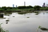 淡水河,新店溪右岸自行車道:DSC_3747.JPG