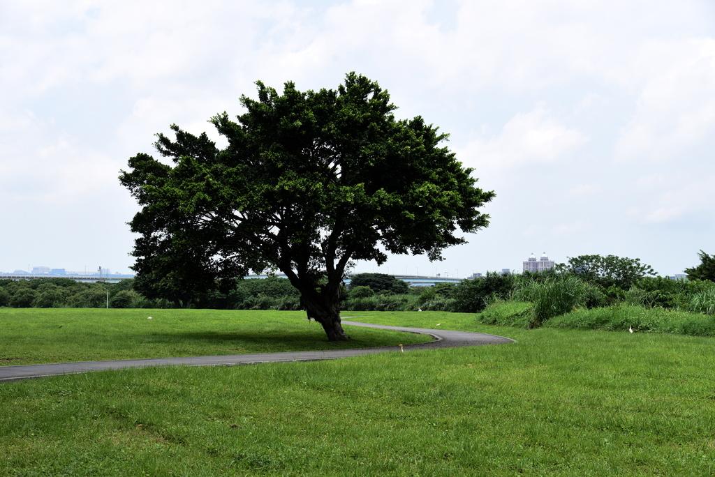 DSC_3653.JPG - 淡水河,新店溪右岸自行車道