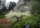 維多利亞布查花園:維多利亞布查花園_1000420_0510 853.jpg