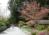 維多利亞布查花園:維多利亞布查花園_1000420_0510 951.jpg