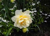 維多利亞布查花園:維多利亞布查花園_1000420_0510 854.jpg