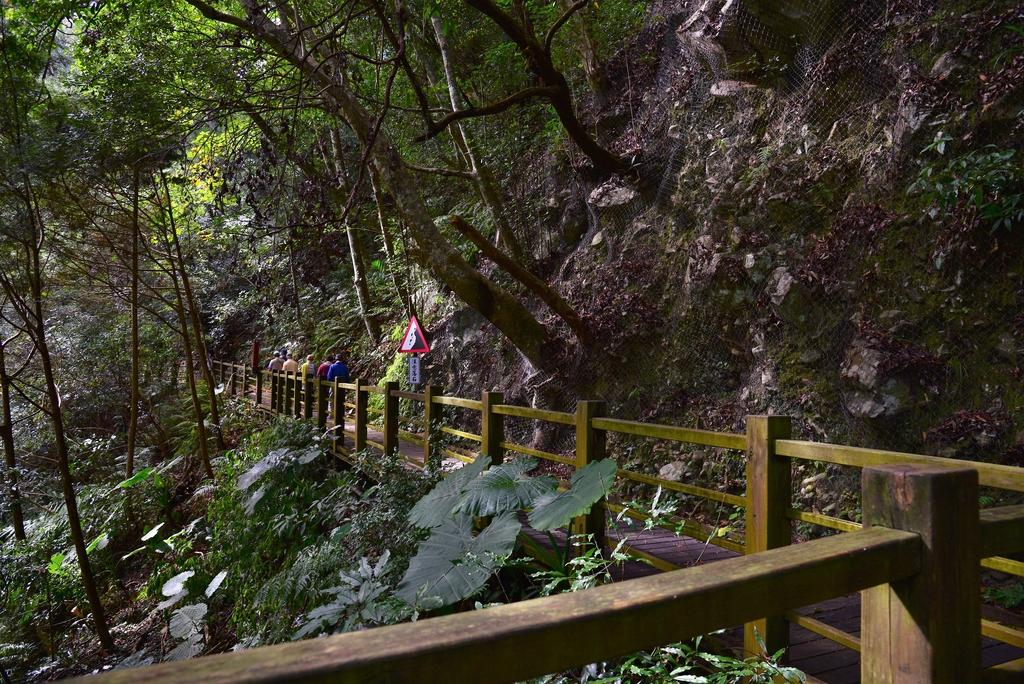 八仙山國家森林遊樂區 (25).JPG - 八仙山國家森林遊樂區