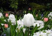 維多利亞布查花園:維多利亞布查花園_1000420_0510 855.jpg