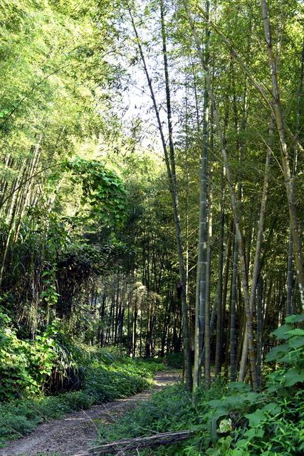 _DSC0160.JPG - 小半天風景區&忘憂森林