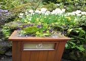 維多利亞布查花園:維多利亞布查花園_1000420_0510 856.jpg