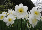 維多利亞布查花園:維多利亞布查花園_1000420_0510 857.jpg