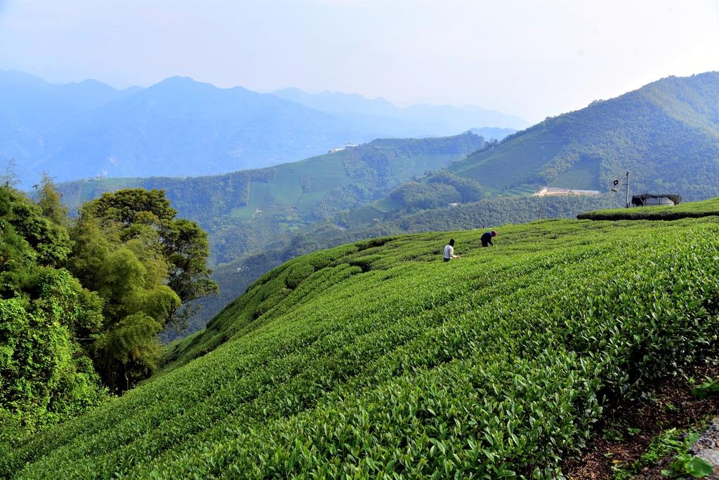 二尖山步道 (2).JPG - 二尖山步道,碧湖山觀光茶園,麗景精品休閒旅館