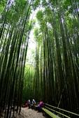 司馬庫斯巨木步道:DSC_6244.JPG