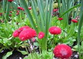 維多利亞布查花園:維多利亞布查花園_1000420_0510 858.jpg