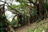 知本國家森林遊樂區:知本國家森林遊樂區 (52).JPG