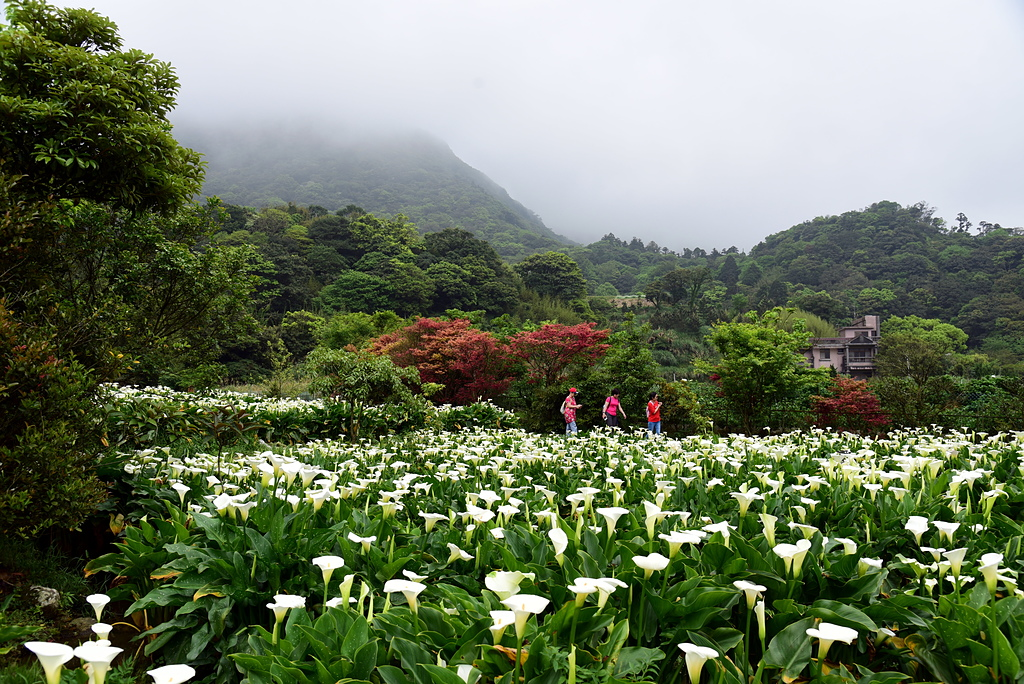 DSC_9999-6.JPG - 苗榜花園餐廳
