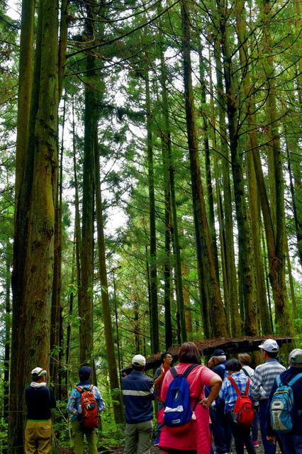 大鹿林道西線 (18).JPG - 觀霧國家森林遊樂區-大鹿林道西線,榛山森林浴步道