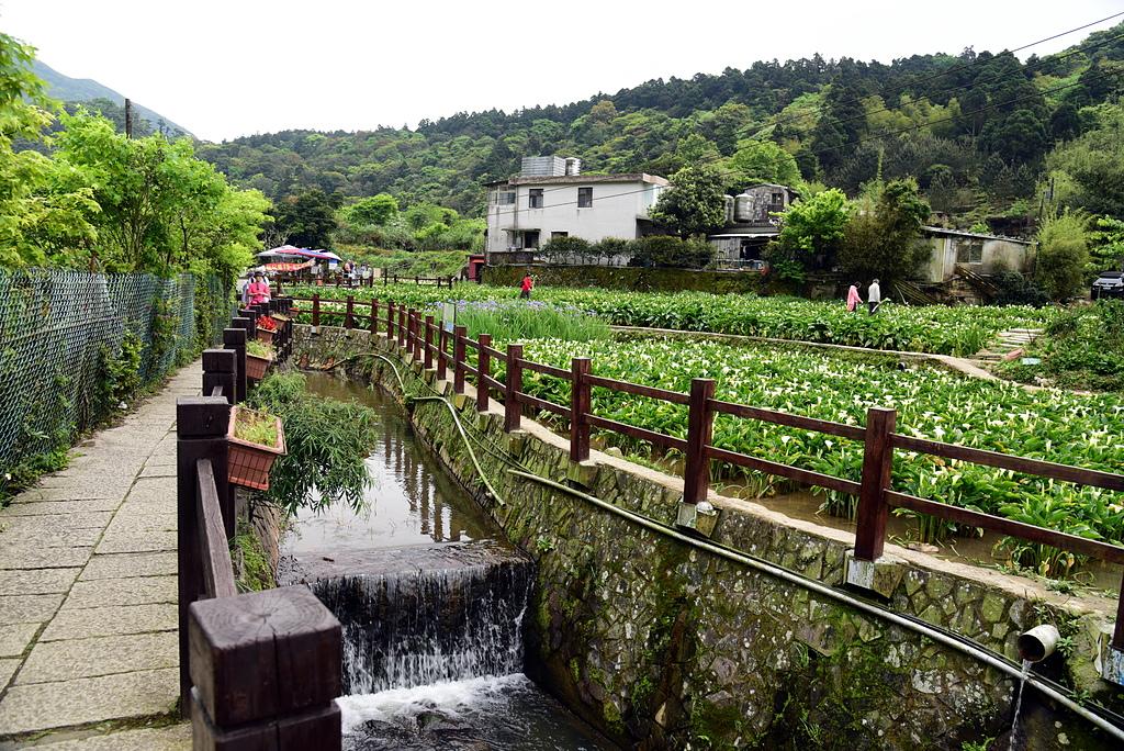 DSC_9884.JPG - 苗榜花園餐廳