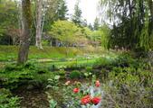 維多利亞布查花園:維多利亞布查花園_1000420_0510 860.jpg
