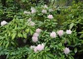 維多利亞布查花園:維多利亞布查花園_1000420_0510 861.jpg