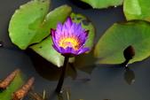 哭泣湖畔自然生態園區:DSC_0281.JPG