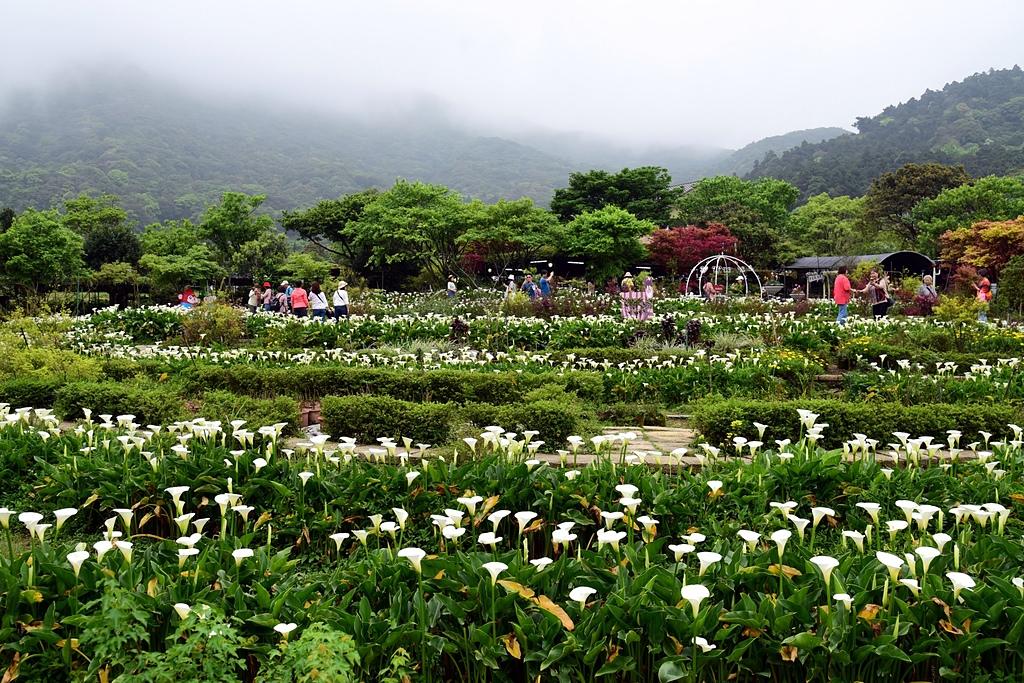 DSC_9999-10.JPG - 苗榜花園餐廳