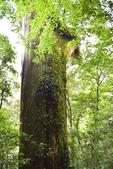 拉拉山國有林自然保護區:_DSC0335.JPG