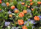 維多利亞布查花園:維多利亞布查花園_1000420_0510 863.jpg