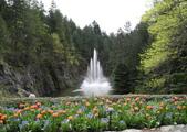 維多利亞布查花園:維多利亞布查花園_1000420_0510 866.jpg