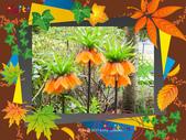 維多利亞布查花園:維多利亞布查花園