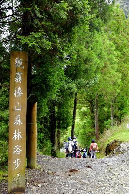 榛山森林浴步道 (2).JPG - 觀霧國家森林遊樂區-大鹿林道西線,榛山森林浴步道