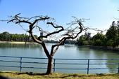 澄清湖:澄清湖 (10).JPG