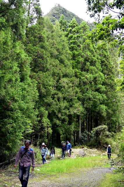 榛山森林浴步道 (8).JPG - 觀霧國家森林遊樂區-大鹿林道西線,榛山森林浴步道