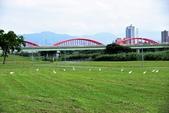 淡水河,新店溪右岸自行車道:DSC_3739.JPG