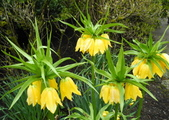 維多利亞布查花園:維多利亞布查花園_1000420_0510 872.jpg
