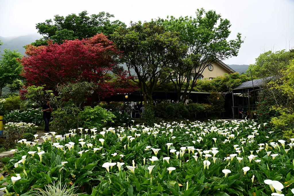 DSC_9960.JPG - 苗榜花園餐廳