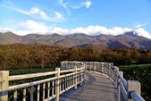 北海道-知床五湖:知床五湖 (11).JPG