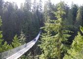 大溫哥華區:北美最長的吊橋CAPILANO_1000420_0510 103.jpg