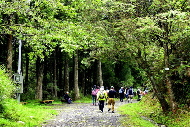 大鹿林道西線 (1).JPG - 觀霧國家森林遊樂區-大鹿林道西線,榛山森林浴步道