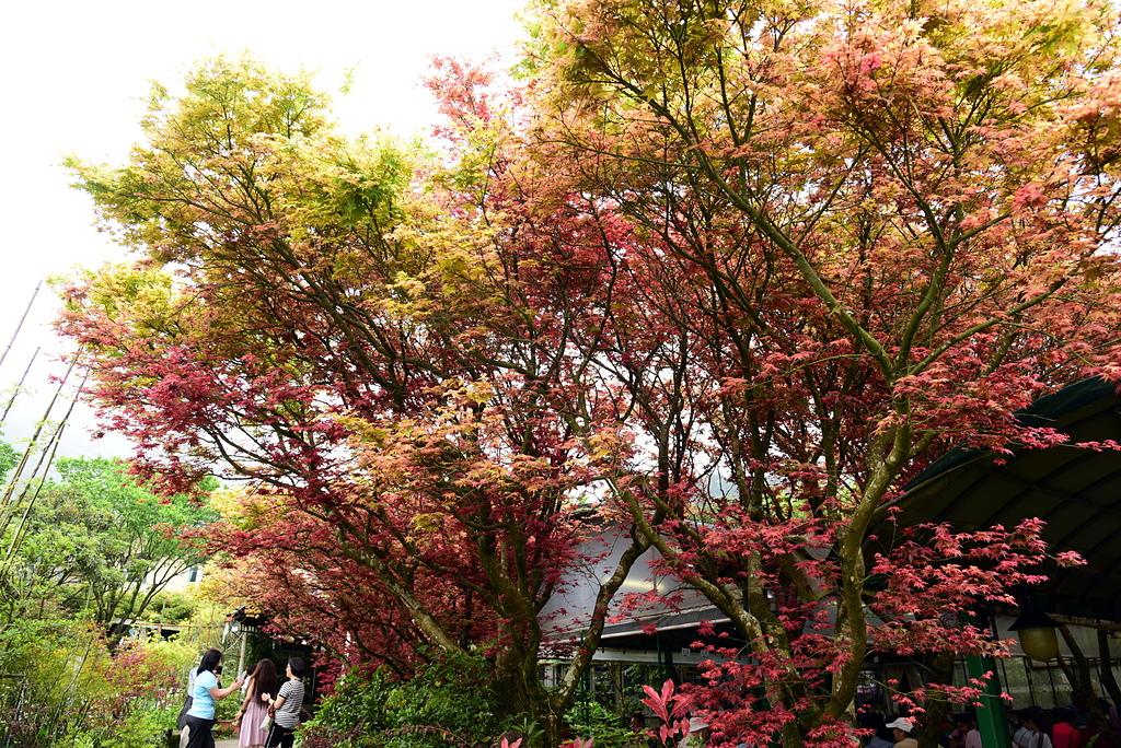 DSC_9911.JPG - 苗榜花園餐廳