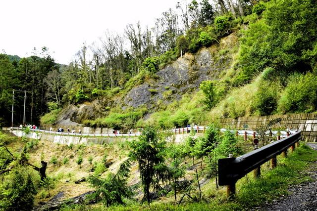 大鹿林道西線 (15).JPG - 觀霧國家森林遊樂區-大鹿林道西線,榛山森林浴步道